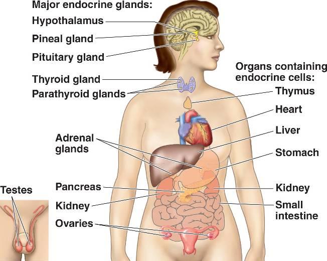 Paper: Zoology Lesson: Hormones: An overview Author: Dr. Smita ...