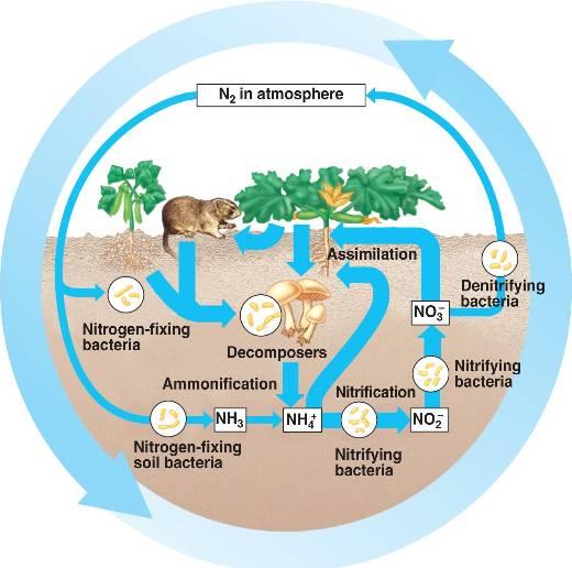 Su ve toprakta amonyum azot